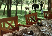 elephant_safari_lodge2.jpg